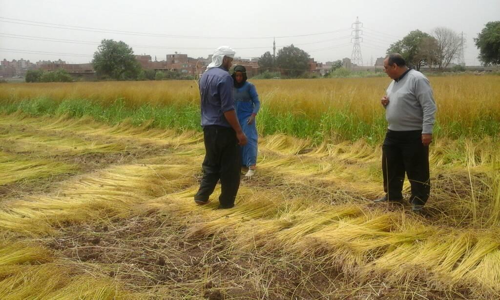 موسم الحصاد للزراعات